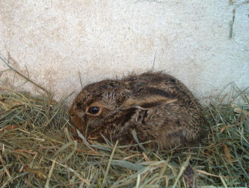 Assez Lapin sauvage bebe y a les photos [HELP] - Page : 3 - Vie  BC08